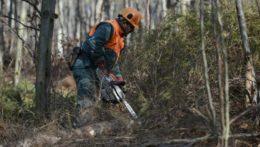 Lesy SR mali pri šiestich zákazkách porušiť zákon