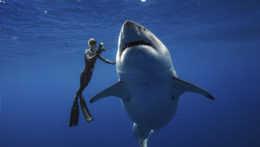 Tehotná žena zachránila manžela pred žralokom