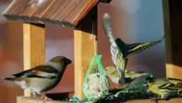 Stará Ľubovňa unikátnym projektom zachraňuje ohrozené druhy vtáctva