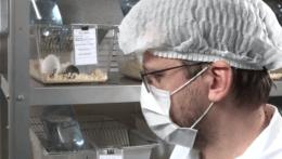 Na východe Slovenska testujú vakcínu Sputnik V na myšiach i morčatách