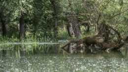 Umelé záplavy pomáhajú oživiť prírodu na brehoch Dunaja