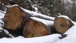 Ťažba dreva na Kysuciach: Miestni majú podozrenie, že pília aj zdravé stromy