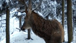 Fotopasce by mali sledovať zvieratá, zachytili aj nelegálnu činnosť ľudí