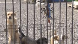 Košice majú po vyše roku karanténnu stanicu pre túlavé zvieratá