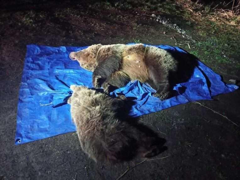 Ochranári v Tatrách usmrtili medvedicu s mláďaťom. Ďalšie medvieďatá ušli do lesa