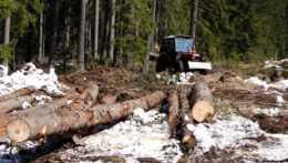 Prokuratúra zrušila obvinenie mladistvého Patrika za krádež dreva v hodnote 26 centov