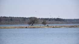 Vtáčí ostrov na Oravskej priehrade.