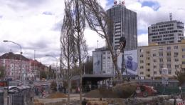 Jeden z najväčších prestupných uzlov v Bratislave spríjemňujú platany
