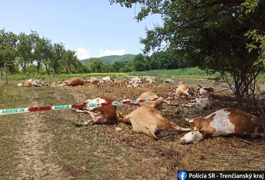 Kravám priviezli kontaminovanú vodu. Desiatky uhynuli