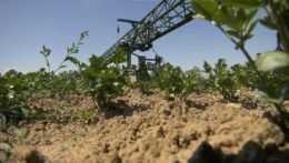 Netradičný spôsob šetrný k prostrediu: Stredoškoláci pestujú zeleninu v kruhoch