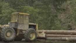 Spracovávanie popadaného dreva.