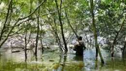 Zdvihnutá hladina Dunaja v Bratislave zmobilizovala lovcov komárov