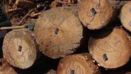 Zo Slovenska sa ročne načierno vyvezie milión kubických metrov dreva