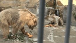 Medvede v ZOO