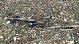 Vlani každý občan SR vyhodil priemerne 446 kíl odpadu, nevyseparoval ani tretinu