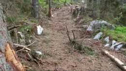 V Nízkych Tatrách ničí ťažba biotopy chráneného hlucháňa