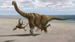Brontomerus mcintoshii sauropod.