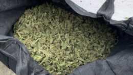 taška plná marihuany