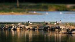 vtáčí ostrov na Orave