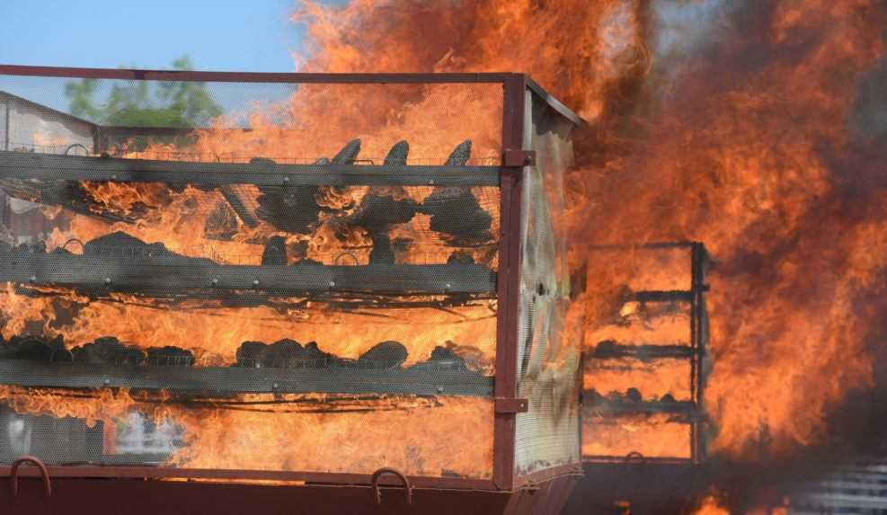 V Indii spálili 2 500 rohov nosorožcov